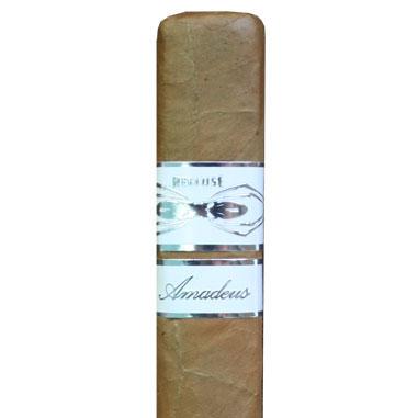 Iconic Recluse Amadeus Connecticut Tarantula - 5 Pack